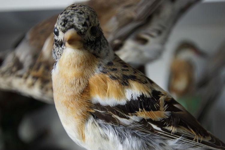 bird-451420_1280